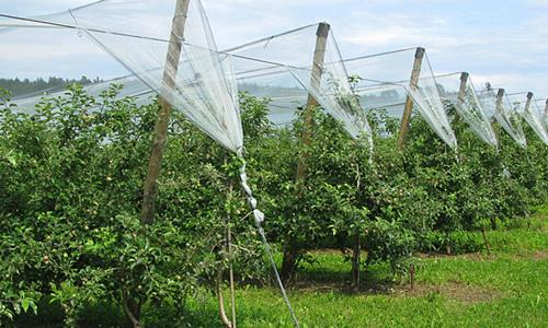 DURAPost - Fruit-Growing - Posts for Orchards & Viticulture