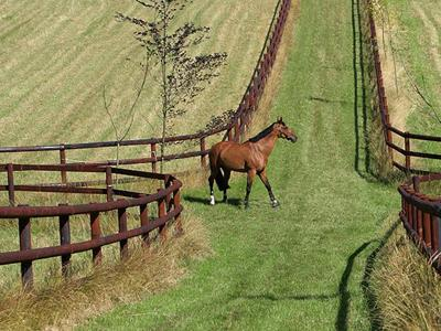 Agricultural fences - Agricultural fencing for horses: How can it be preserved?
