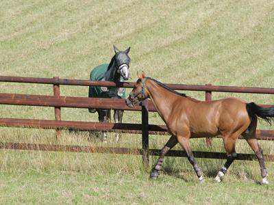 Agricultural fencing for horses: How can it be preserved?