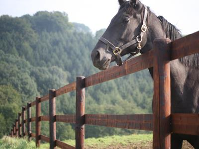 Country fences for horses - Agricultural fencing for horses: How can it be preserved?